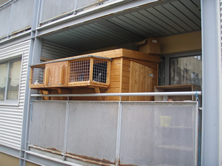 pigeon loft on balcony