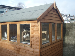 pigeon shed